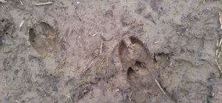 DeerprintsJan11