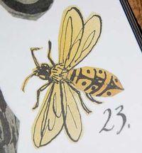 Wasp23